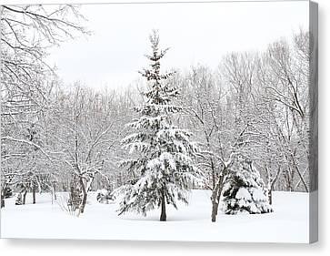 Winter White-out Canvas Print