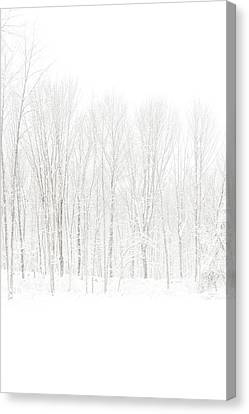 Winter White Out Canvas Print by Karol Livote