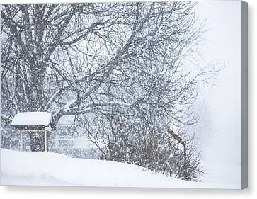 Canvas Print featuring the photograph Winter White Out by Robert Clifford