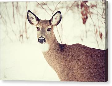 Winter White Tail Canvas Print by Karol Livote