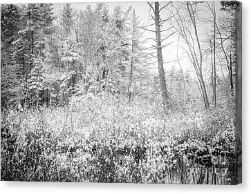 Winter Whites Canvas Print by Sue OConnor