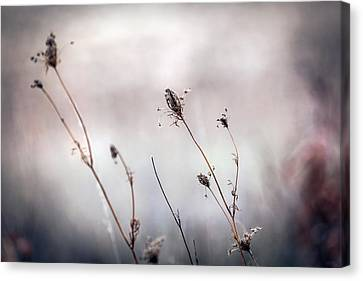Canvas Print featuring the photograph Winter Wild Flowers by Sennie Pierson