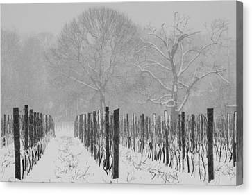 Canvas Print featuring the photograph Winter Wine by Steven Macanka