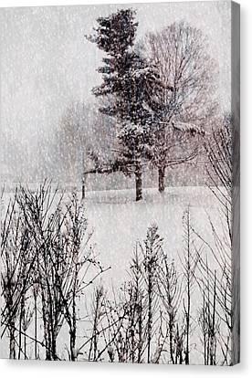 Winter Wonder 2 Canvas Print