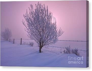 Winter Wonder Land Canvas Print by Dan Jurak