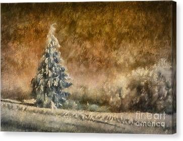 Winter Wonder Canvas Print by Lois Bryan