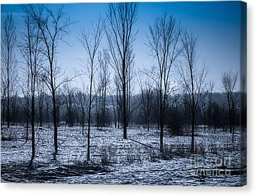 Canvas Print featuring the photograph Winter Wonderland by Bianca Nadeau