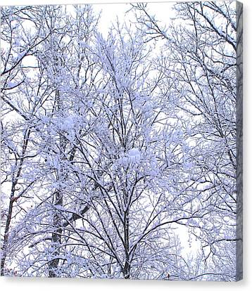Canvas Print featuring the photograph Winter Wonderland by Candice Trimble