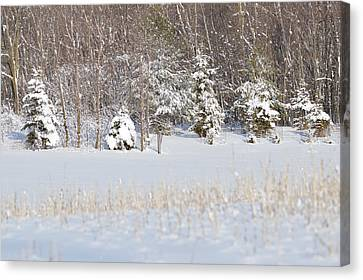 Canvas Print featuring the photograph Winter Wonderland by Dacia Doroff