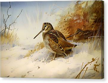 Winter Woodcock Canvas Print by Mountain Dreams