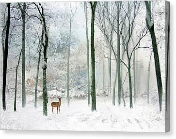 Winter Woodland Canvas Print by Jessica Jenney