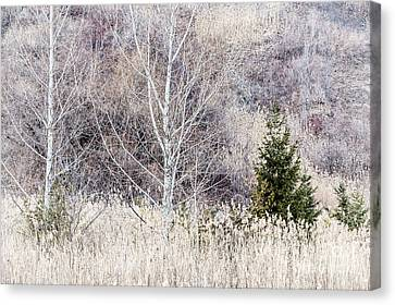 Winter Woodland With Subdued Colors Canvas Print