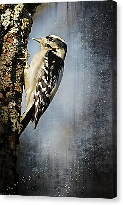 Winter Woodpecker Canvas Print by Lena Wilhite