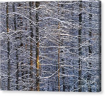 Winter Woods Canvas Print by Alan L Graham