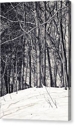 Winter Woods Canvas Print by Sara Frank