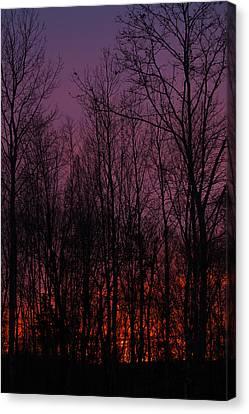 Winter Woods Sunset Canvas Print by Karol Livote