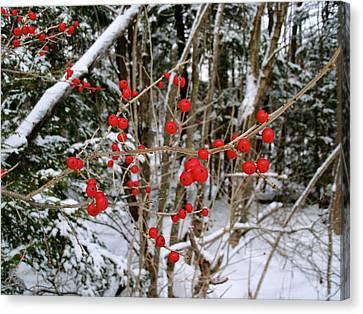 Winterberry Canvas Print