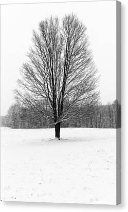 Winterclove Canvas Print by Rick Berk