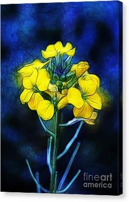 Wintercress Canvas Print by Judi Bagwell