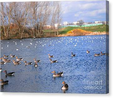Canvas Print featuring the photograph Wintering Birds - Mayesbrook Park by Mudiama Kammoh