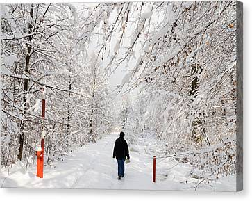 Winterly Forest With Snow Covered Trees Canvas Print by Matthias Hauser