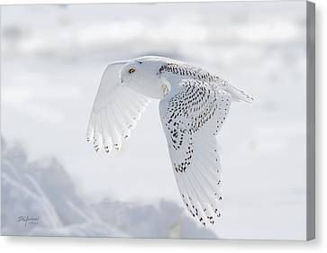 Winters Angel Canvas Print