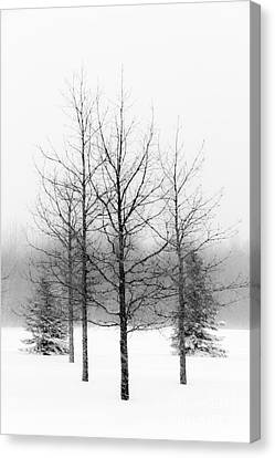 Winter's Bareness  Canvas Print