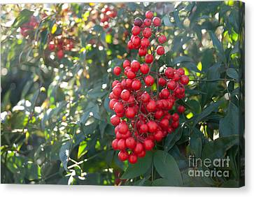 Canvas Print featuring the photograph Winter's Berries by Lena Wilhite