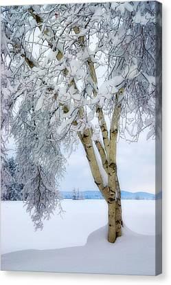 Winter's Dream Canvas Print by Darylann Leonard Photography