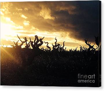 Winters Eve In The Vineyard Canvas Print by France  Art