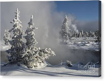 Winter's Glory - Yellowstone National Park Canvas Print by Sandra Bronstein