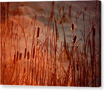 Canvas Print featuring the photograph Winter's Glow by R Thomas Brass