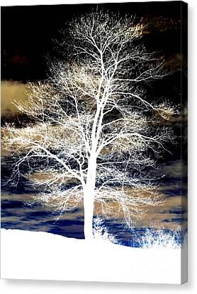 Winter's Night Sky Canvas Print by Janine Riley