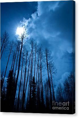 Winters Sky Canvas Print by Dana Kern
