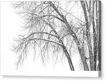 Snow Scene Canvas Print - Winter's Weight by Darren  White