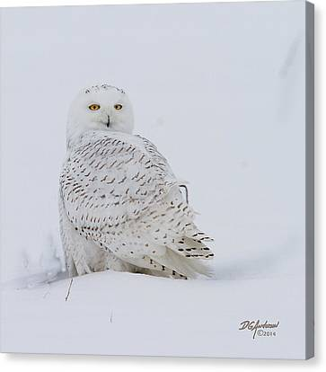 Winters White Canvas Print