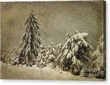 Winter's Wrath Canvas Print by Lois Bryan