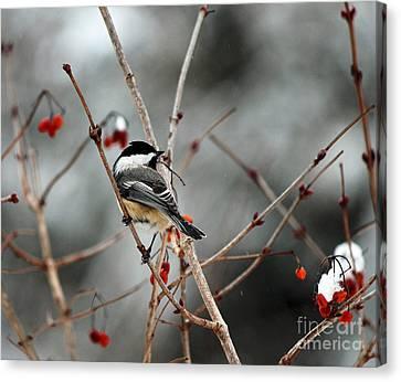 Wintertime Chickadee Canvas Print