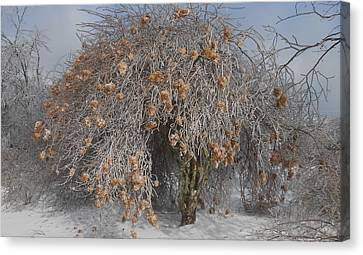 Wintertime Snowball Bush Tree Canvas Print by Diannah Lynch