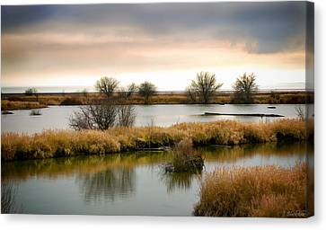 Canvas Print featuring the photograph Wintery Wetlands by Jordan Blackstone