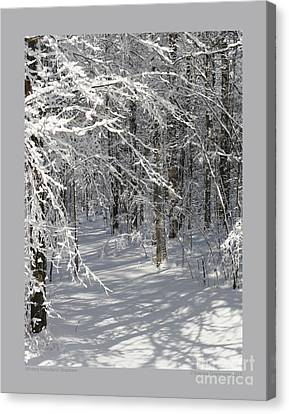 Wintery Woodland Shadows Canvas Print by Patricia Overmoyer