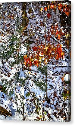 Wintry Mix Canvas Print