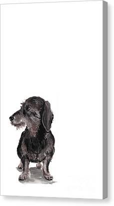 Wirehaired Dachshund - Rauhaardackel Canvas Print by Barbara Marcus