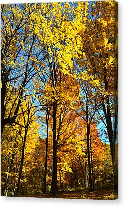 Wisconsin Fall Colors Canvas Print by Ray Mathis