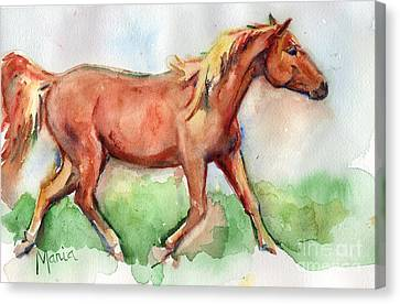 Horse Painted In Watercolor Wisdom Canvas Print by Maria's Watercolor