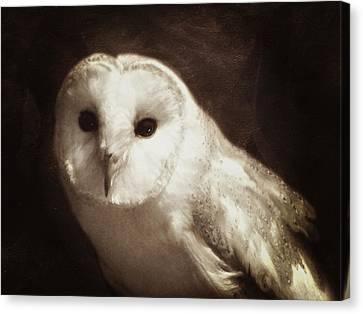 Wisdom Of An Owl Canvas Print by Georgiana Romanovna