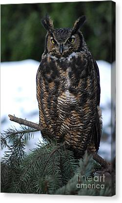 Wise Old Owl Canvas Print by Sharon Elliott