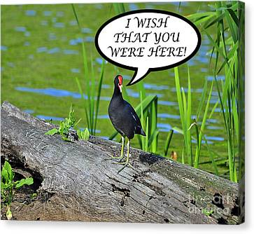 Wish You Were Here Moorhen Card Canvas Print by Al Powell Photography USA