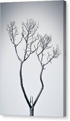 Wishbone Tree Canvas Print by Carolyn Marshall