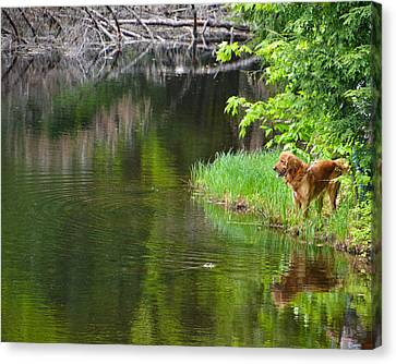 Wishin' He Was Fishin' Canvas Print